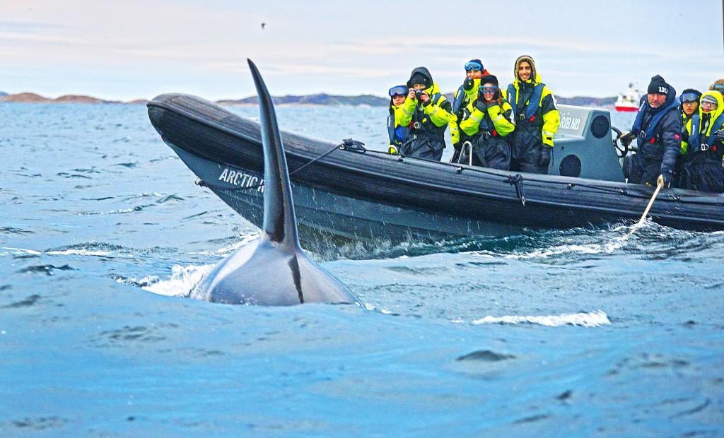Miekkavalaiden evän sulava liike meren pinnassa on lumoavaa. Kilpailu parhaan kuvan saamisesta käy joskus eläinten hyvinvoinnin päälle. KUVA: ILKKA JAAKOLA