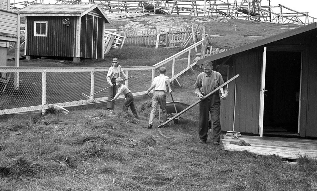 Anton Salmi slår med ljå, to ungdommer raker og en kjører trillebår. Hjeller på Sankarhaugen.