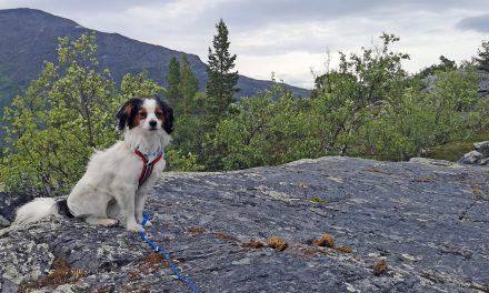 Ut på tur: Her finner du fjellvettreglene på kvensk