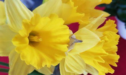 Ristiinnaulittu Jumala – Pääsiäisen viesti