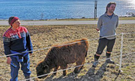 Ruijan Radio intervjuet den kvensktalende kalven Jussi