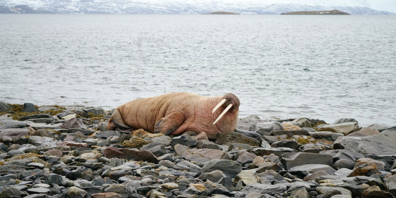 Typisk strandliv i nord • Tyypillinen rantaelämä pohjoisessa