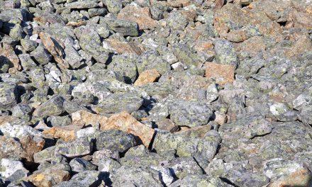 Pörhönen juolikossa • Sommerfuggel i steinland
